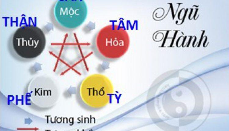 Học thuyết tạng tượng Y học cổ truyền