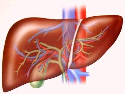 Lưu ý khi sử dụng thuốc cho người suy giảm chức năng gan