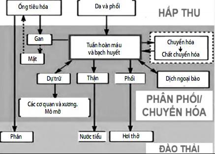Duong_di_cua-thuoc_trong_co_the