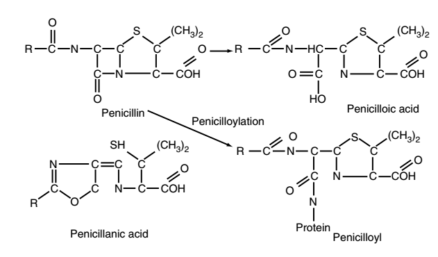 Penicillin bán tổng hợp