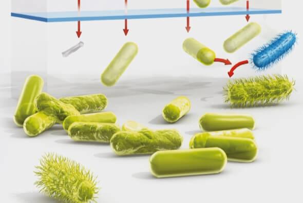 Sự phát triển của vi khuẩn kháng kháng sinh